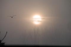De zon of de mist? (Anieteke) Tags: sun zon zonsopkomst fog mist sky cold winter
