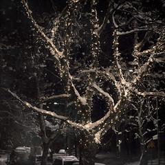 Tingeling (Samuel Poromaa) Tags: urban night winter squarephotography samuelporomaa poromaa