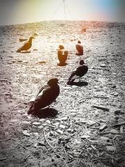 Something alien is landing... (kallchar) Tags: birds sand land blackandwhite blackwhite alien colors light art flickr olympusomdem10 olympus strange many nature