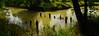 The ruins of an old mill (ChemiQ81) Tags: polska poland polen polish polsko chemiq польша poljska polonia lengyelországban польща polanya polija lenkija ポーランド pólland pholainn פולין πολωνία pologne puola poola pollando 波兰 полша польшча outdoor summer lato landscape las forest wald les przyłęk szyszki szczekociny nakło mill młyn ruiny ruins pilica