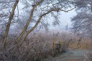 Framework - Turf Fen, Norfolk