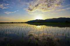 Rice Field Sunset Reflection (Yohsuke_NIKON_Japan) Tags: sun mountain reflection nature japan clouds evening countryside nikon rice dusk farm wide highcontrast filter  shimane agriculture ricefield  japaneseculture   sanin d600    1635mm   tanbo  colorefex