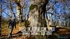 Festa dell'albero nel Boco di Sant'Antonio - Majella - Abruzzo - Italy