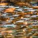 thousands of tiny... (nosha) Tags: sea orange usa fish green water beautiful beauty gold monterey marine wildlife