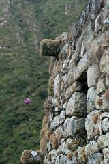 Peru-8561.jpg (Matt and Debbie) Tags: peru llama 2015 wayna winaywayna wiay