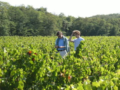 "Levin Vineyard - Jolyon & Ben • <a style=""font-size:0.8em;"" href=""http://www.flickr.com/photos/133405556@N08/20078993705/"" target=""_blank"">View on Flickr</a>"