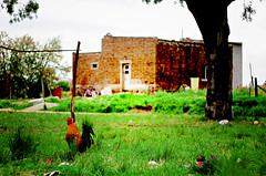 Gallo de potrero (mujik estepario) Tags: pentaxk5iis vivitarseries170210mmf35kiron pentaxlife pentax pentaxart carhue gallo