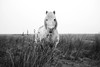Marsh Horse (macal1961) Tags: horse pony wild nature marsh hardy survival llanrhidianmarsh gower wales leica character portrait