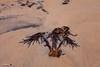 Palm Trees (night watch1) Tags: palmtree tree palm sand beech beach frons seaweed root sea shaw