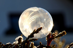 look what I found today morning in my garden :-) (Wackelaugen) Tags: sparkling bubble frozen sparkle focusstacking canon eos photo photography wackelaugen