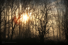 misty morning 10.12.2016 -p4d- 016 (photos4dreams) Tags: mistymorning10122016p4d winter photos4dreams p4d photos4dreamz photo rauhreif frosty rime hoarfrost landschaft landscape forest outdoor