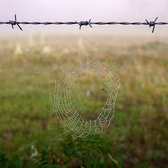DEW DROP IN (scatrd) Tags: web rural country macro a6000 spiderwebs aberfoyle e30mmf35macro jasonbruth sonya6000 sony 2016 newsouthwales australia nsw au