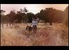 Welcome to Oz (Claudia Hantschel) Tags: claudia hantschel australia photography portrait girl woman sunset nature colorful oz magical orange yellow field grass suitcase bag summer summerfeeling feeling romance endless love woods hat wa westernaustralia western