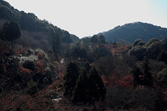 Autumn at the trace6@Kiyomizu, Kyoto (Amselchen) Tags: kyoto japan travel season lateautumn earlywinter trees colours leaves temple kiyomizu fuji fujinon fujifilm fujifilmxseries xt2 fujixt2 xf35mmf14r