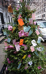 Wishing Tree for 2017 on 88th Street and Amsterdam Avenue, NYC (AndrewDallos) Tags: 2017 wishing tree holiday wish new year manhattan nyc york city