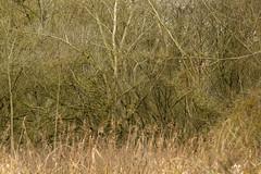 20170104-_IMG0954-Edit (fleetingphotons) Tags: pentaxk1 smcpentaxa200mmf28ed wasingestate fishing warrenbeat kennet trees