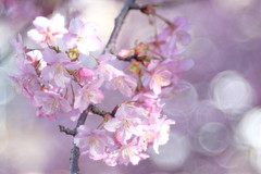 Early spring  -  桜 (Hideo N) Tags: 桜 sakura trioplan xt1 itsallaboutflowers fantastic flower fantasticflower