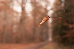 The birth was quick but the death is slow (surfingstarfish) Tags: leaf laub blatt herbst winter autumn wood forest wald nature natur focus baum tree cold path depthoffield landscape unscharf unschärfe
