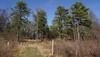 DSC02808 (dr.tspencer) Tags: abanypinebushpreserve albanyny trees pines naturepreserve landscape