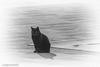 io (conteluigi66) Tags: gatto felino seduto selciato pavimento mattonelle esterno luigiconte