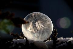 winter's jewelry (Wackelaugen) Tags: bubble frozen soapbubble winter cold macro canon eos photo photography wackelaugen