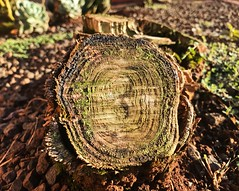 (Vinicius Tomazoni) Tags: plant tree wooden wood outdoors nobody nature log leaf forest food fall closeup background life autumn encourage inspiritional science environment ecology grass rest cut wound hurt planet alienation earth