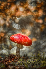 Fliegenpilz (Skodiar) Tags: trioplan moshroom pilz forest funghi fliegenpilz amanitamuscaria wald canon canon500d