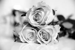 Roses (Maria Eklind) Tags: dof blackandwhite flower spegling rose reflection bw ros blomma depthoffield malmö skånelän sverige se