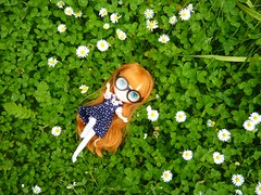 Kiki Hanako: I am sinking into a bed of clover! 179/365 (Bebopgirl1969) Tags: daisies garden lawn blythe clover lesjeunette