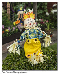 Sunflower Scarecrow (Paul Simpson Photography) Tags: flowers summer plants festival image straw images lincolnshire hedge scarecrows photosof imageof hibaldstow photoof imagesof sonya77 paulsimpsonphotography june2015