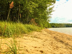Vtterviksbadet in August 2015 (Flicker Classic Person) Tags: beach grass forest nude sand sweden bad nudist naturist sverige safe plage fkk vttern unofficial stergtland 2015 vtterviksbadet