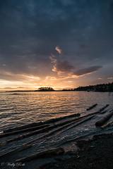 Sunrise at high tide (waledro) Tags: sunrise neckpointpark logs