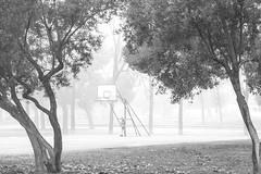 Jugador solitario (Anvica) Tags: zaragoza parque park baloncesto basket jugador player blancoynegro blackandwhite niebla fog fuji xt1