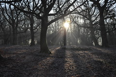 364/366 Sun v frost (katy1279) Tags: 366project frost sunshine sunbeams woodland trees stonecircle