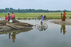 Crossing!! (ashik mahmud 1847) Tags: crossing transport bangladesh rurallife dailylife water road people bycycle d5100 nikkor