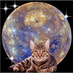 #cat #postcard #spaceart #space  #art #artistic #artsy #beautiful  #indieart #psychedelic #psychedelicart #trippy #trippyart #digitalart #creative #creativity #daring #different (muchlove2016) Tags: cat postcard spaceart space art artistic artsy beautiful indieart psychedelic psychedelicart trippy trippyart digitalart creative creativity daring different