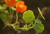 Red and Green (Bhaskar Dutta) Tags: red green dew drop water fresh bright khajuraho india