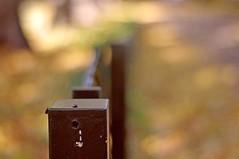 Three bugs on a fence post (Simon's utak) Tags: hff happyfencefriday pentaxa5017 bokeh smoothbokeh