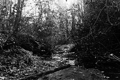 Creek (skye-skye) Tags: nature creek 35mm film water trees art artist young youth youthul youngster kid kids child children teen teenager teens teenagers skye skyes skyesphoto skyesphotos sky skyephoto skyephotos 104 tenfour ok affirmative yes create creation creative beauty beautiful
