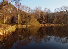 2016_12_0594 (petermit2) Tags: clumberpark clumber sherwoodforest sherwood nottinghamshire nationaltrust nt