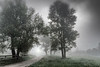 The mysterious path (marko.erman) Tags: light sun trees silhouette sony morning cerknica slovenia slovenija lake jezero mist misty mood moody landscape secret mysterious path