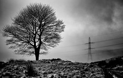 Exposed (Missy Jussy) Tags: tree pylon fog mist moodylandscape atmosphere rochdale winter britishweather hillside landscape lancashire land light shadows footpath odeon piethornevalley lonetree mono monochrome bw blackwhite blackandwhite canon 50mm canon50mm canon5dmarkll silhouette