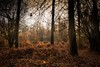 Deep in the woods of Bourne (Northern.Exile) Tags: naturalbeauty lincolnshire bourne bournewoods woodland uk englishcountryside nikon autumnal 1855mm d3300 colors photos britian photosofbritain england british countryside