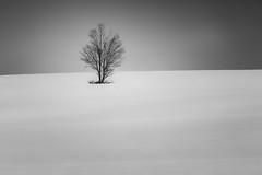 winter sleep (Marc McDermott) Tags: field farm hill beautiful dramatic lone white winter cold pure rural landscape