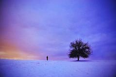 infinite horizons. (six-underground.) Tags: nature tree silhouette sky landscape horizon infinity nikon d90 nikond90 snow winter cold creative fineart colours clouds