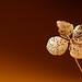 Gyllene blad