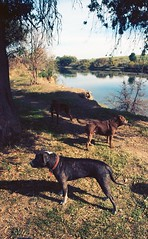 16189 (dannondale) Tags: dogs feral feraldogs river sacramento tent city nikon shootfilm 35mm 35mmfilm fm 24mm ai colorfilm ektar kodak