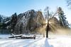Tree at Cathedral Rock (kristinfuller) Tags: yosemite yosemitenationalpark yosemitevalley winter snow trees chasinglight sunbeams landscape nature landscapephotography