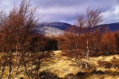 Catch the wind (Fr Paul Hackett) Tags: grass wind kingussie wild landscape cloud