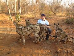 Mukuni Big Five Park (David N. Berger) Tags: africa cats money tourism animals wildlife conservation tourists lions cheetah elephants capitalism bigcats zambia bigfive reintroduction